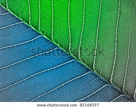 blue-green Leaf texture #82168597