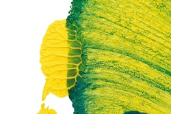 blue green yellow abstract acrylic painting color texture on white paper background by using rorschach inkblot method