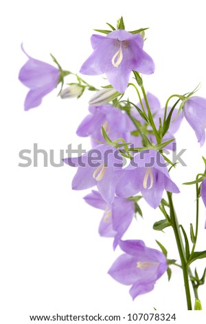 blue hand bells on a white background