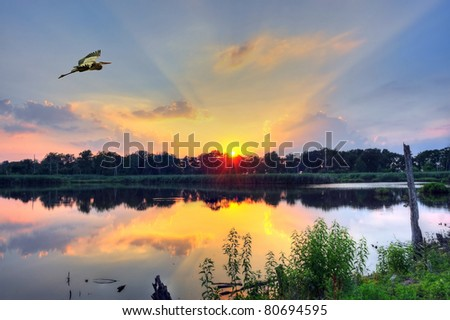 Blue Heron flys over a pond on the Chesapeake Bay in Maryland at sunset