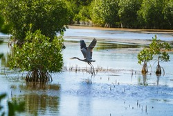 Blue Heron from Big Cypress National Reserve in the Everglades