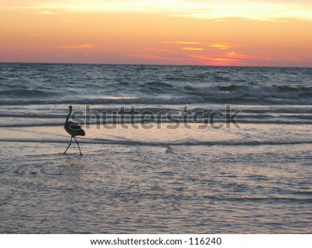Blue Heron on beach in sunset #116240