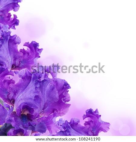 Blue irises against a green grass, a summer butterfly