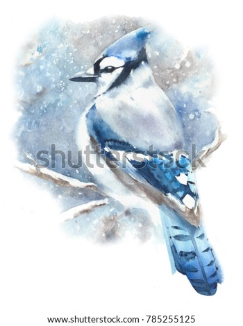 Stock Photo Blue jay bird winter blue color bird in snow watercolor painting illustration isolated on white background