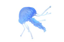 blue jellyfish isolated on the white background