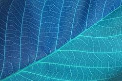 blue leaf background