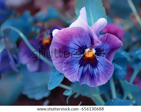 Free photos purple flower with yellow center avopix blue lilac purple flowers with a yellow center 656130688 mightylinksfo
