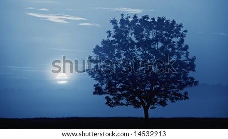 Blue moon light, fog and tree. Night shot.