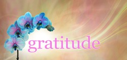 Blue Orchid Floral Gratitude Message  Banner - blue and pink orchid flower heads arcing over the word GRATITUDE on a peach  and pink background with copy space above
