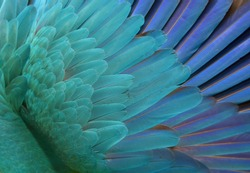 Blue Parrot Feathers. Background