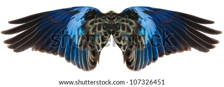 Blue parrot wings isolated on white