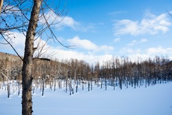 Blue pond in winter covered with snow in Biei