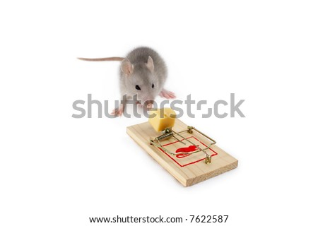 Blue rat, mousetrap and cheese (isolated on a white background) need more - see other pictures from this set
