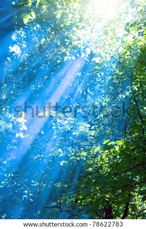 Blue rays in sunny forest