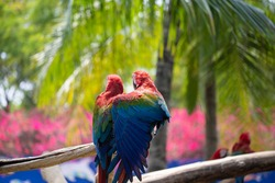 Blue-red-green long-tailed parrot Many of them perched on branches with colorful feathers. Macaw bird close uphas a background of nature Soft focus with blurred background.