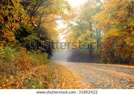 Blue Ridge Parkway in North Carolina is covered in mist and golden yellow leaves.  ROad is undisturbed.  Low angle shot.
