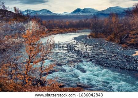 blue river is flowing in   Abisko National Park in polar Sweden in evening golden  autumn Stock foto ©