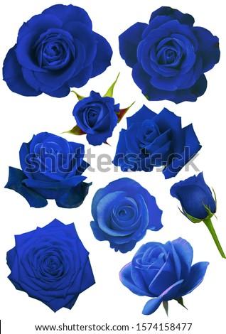 blue rose blue rose blue rose allabout blue rose