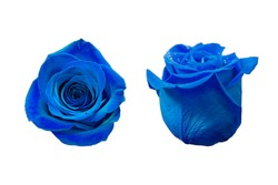 Blue Rose isolated on white background: top view and side view