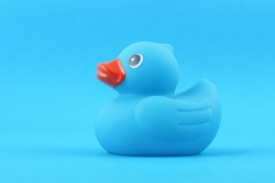 Blue rubber bath duck isolated on the blue background