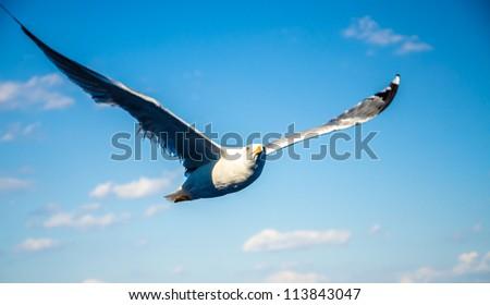 Blue seagull #113843047