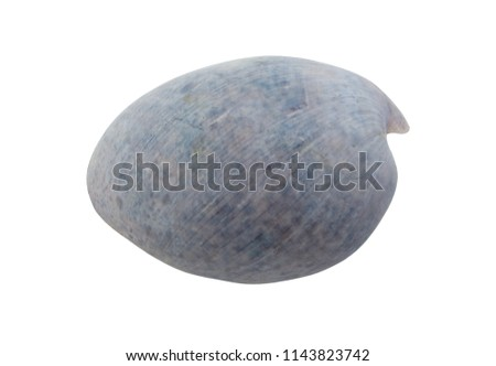 Blue seashell isolated on white