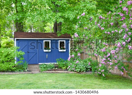 Photo of  Blue she shed and lilac bush in the backyard