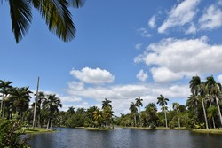 Blue skies and palm trees with water in the foreground