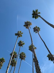 Blue Skies with Birds or Palm Trees of California