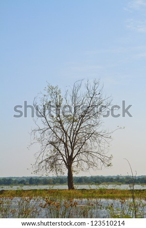 Blue sky and a silhouette of tree, water around - stock photo