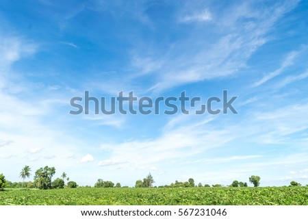 Blue sky and beautiful cloud with meadow tree. Plain landscape background for summer poster.  The best view for holiday. #567231046