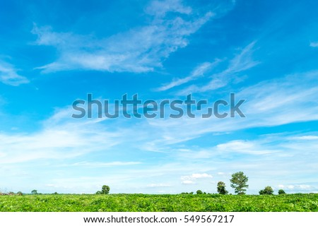 Blue sky and cloud with tree. #549567217