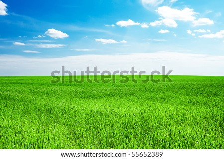 blue sky and field of green grass
