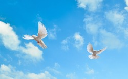 blue sky and flying doves