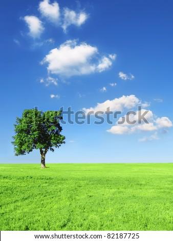 Blue sky and grass #82187725