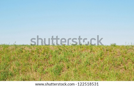 blue sky and green grass