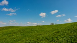 Blue sky and green grass on a hilltop on a sunny day, panoramic landscape. Spring landscape, May. Web banner. Ukraine. Europe.