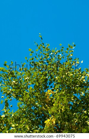 Blue sky and leaves perfect use as background