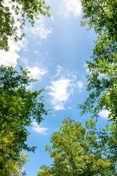 Blue sky and trees, fresh green season