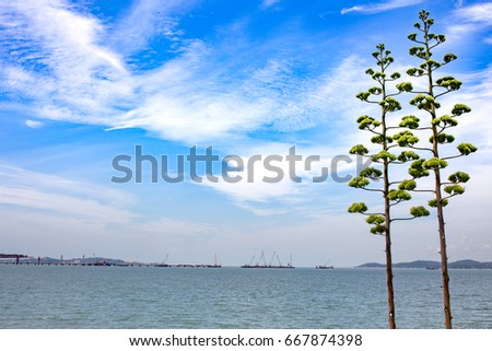 Blue sky and trees in the front.The Kinmen Bridge is under construction behind. #667874398