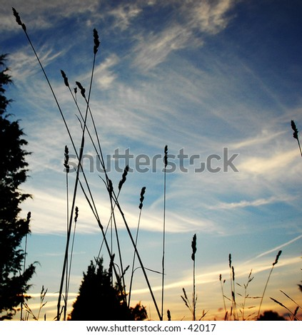 Blue sky and whispy clouds with tall grass