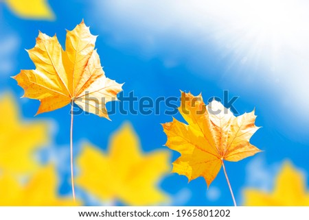 Blue sky. autumn landscape with bright colorful leaves. Indian summer. foliage.