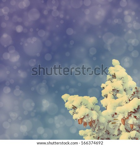 blue sky background with cones on christmas fir - vintage retro style