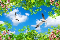 blue sky background with spring flowers and flying seagulls