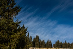 blue sky fine clouds from the wind and pinetrees in the nature