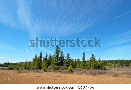 Blue sky landscape. Dolly Sods, Monongahela National Forest, West Virginia, USA