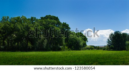 Blue sky, lush green field, and forest