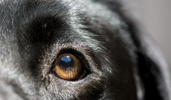 Blue sky reflected in dogs eye
