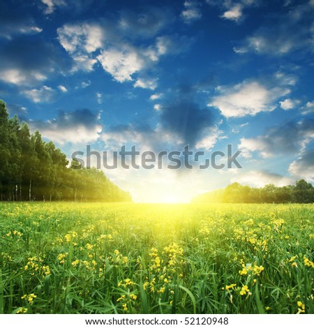 Blue sky,sun and yellow rapeseed field. - Shutterstock ID 52120948
