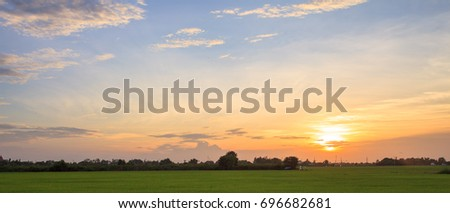 Blue sky sunset on rice field #696682681
